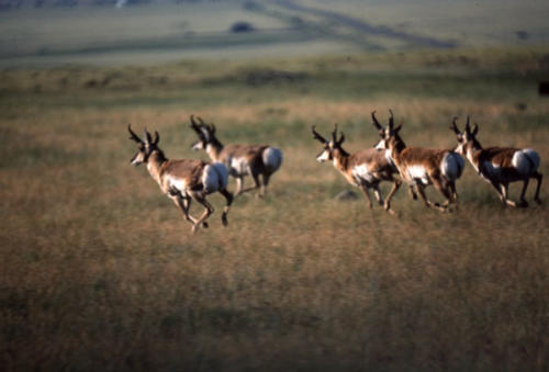 Area Wildlife